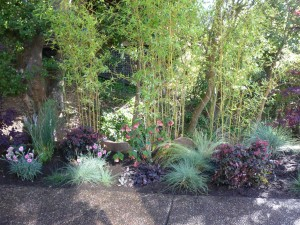 Marin Landscaping patio plantings